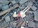 gazze-saldiri-ocak-2009-4